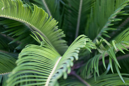 Green tropical leaves texture close up background. Palm branch macrophotography Stock Photo