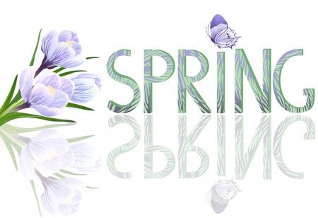 crocuses: Crocuses flowers. Spring season Illustration