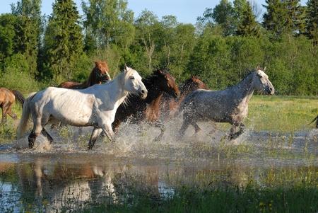Flock of horses in splashes