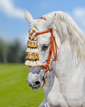 purebred: grey andalusian horse spanish decoration