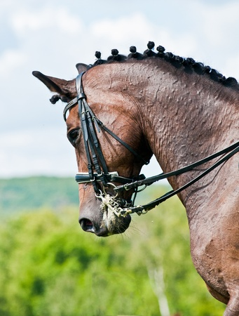 Beautiful sport dressage horse  Horse and rider ready to compete Stock Photo - 12791551