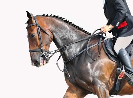 animal practice: jinete y caballo de salto de la bah�a aislada sobre fondo blanco