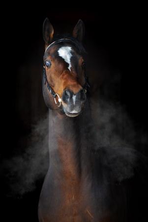cavallo in corsa: Baio in inverno con le nuvole di vapore da respiro al buio