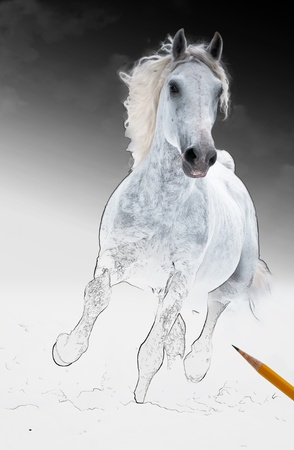 An artistic rendrering of an white horse runs gallop, get living from arts scetch; digital illustration