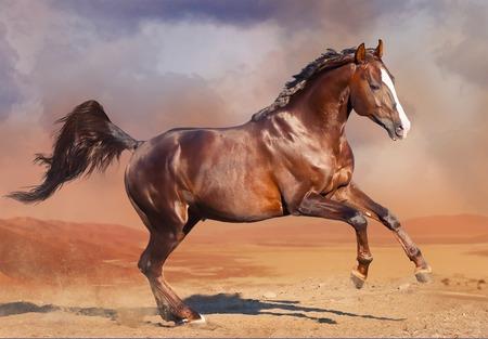 Running bay horse in the desert