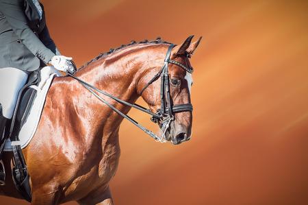 Dressage bay horse and rider on on orange background Stock Photo