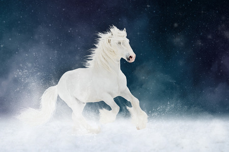 shire horse: White Shire horse stallion runs gallop over star sky background, art