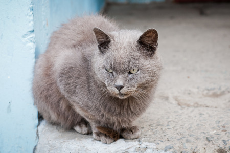 Expressive look of the grey striped cat sitting on the pavement .Homeless