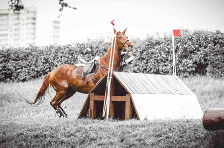 eventing: Cross country rider crashing out, dangerous sport, the rider falls off the horse, the disobedience, abrupt stop in front of hard obstacle, duotone art