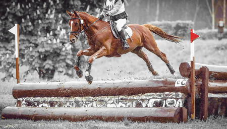eventing: Rider jumps a horse during practice on a cross country eventing course, duotone art Stock Photo