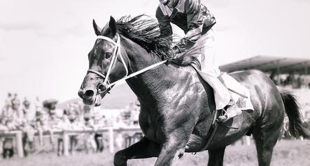 racing horse portrait in action