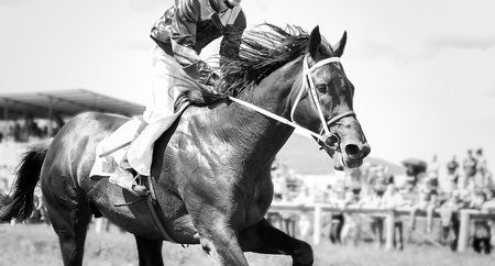 racing horse portrait in action