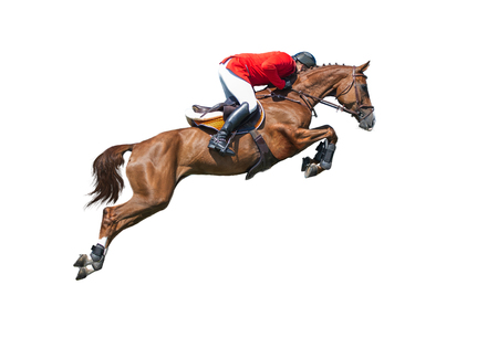 Rider on bay horse in jumping show, isolated on white background