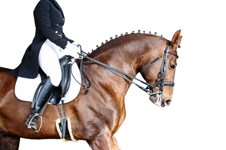 Equestrian sport portrait - dressage head of sorrel horse isolate on white background Stock Photo