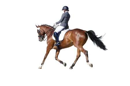 Equestrian sport - dressage rider portrait isolated on white Stock Photo
