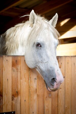 A white horse look at me in stables