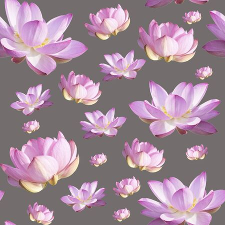 Pink Lotus Flower. Floral Botanical Flower. Seamless Background Pattern.