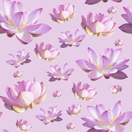 Pink Lotus Flower. Floral Botanical Flower. Seamless Background Pattern. On White