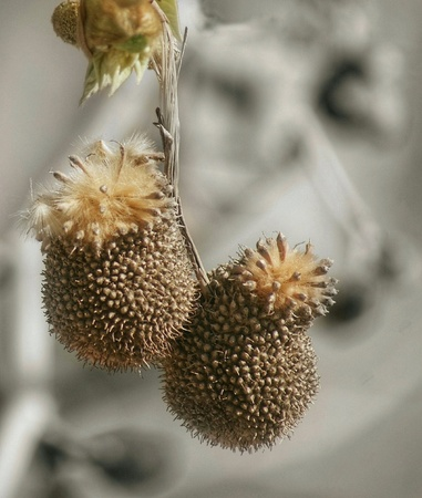 Pollen in the tree