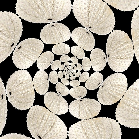 Be urchin in mandala Imagens