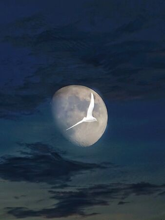 Flying in the clouds with the moonlight Stok Fotoğraf