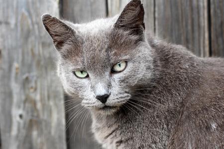 black textured background: Beautiful gray cat