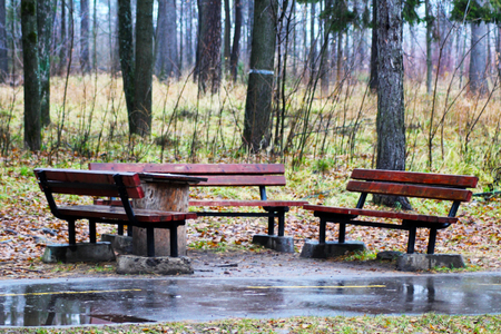 wooden benches in the quiet city park, nature