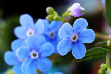 blue spring flowers so close, nature macro