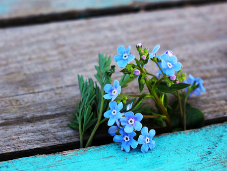 blue spring flowers on wooden table macro