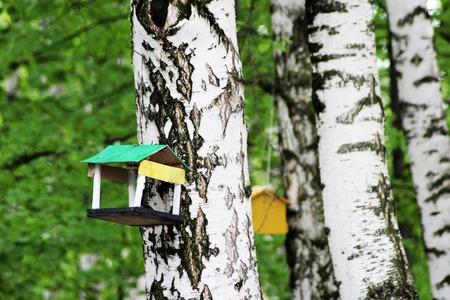 bird feeder on the birch, nature object Zdjęcie Seryjne