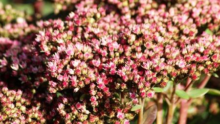 Deep pink flowers so close, nature, macro
