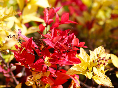 Red autumn leaves, very shallow focus, sunny autumnal day Stock Photo