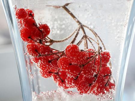 Red viburnum berries under water, drops very close