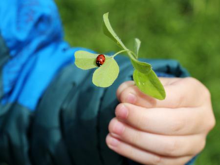 Ladybug on grass. Standard-Bild
