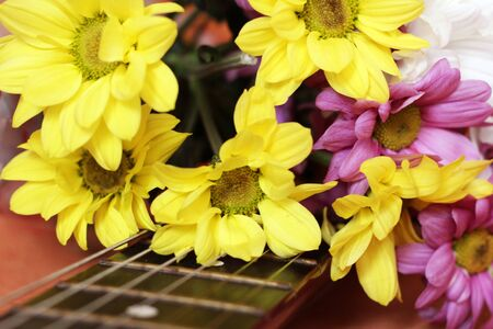 Spring colored daisies on guitar so close