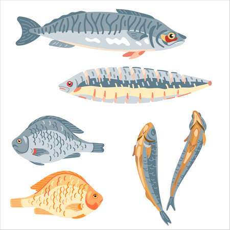 Different kinds of fish for food