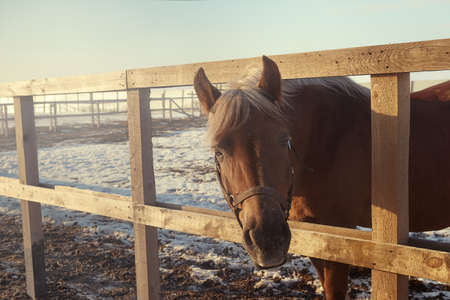 Horse walking in a winter paddock - selective focus image