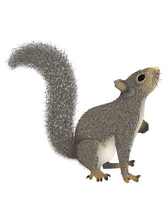 Realistic squirrel with fluffy tail that looks up. Vector illustration, isolated, white background Banco de Imagens - 125578421