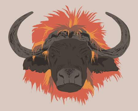 Buffalo with lion mane. Vector illustration
