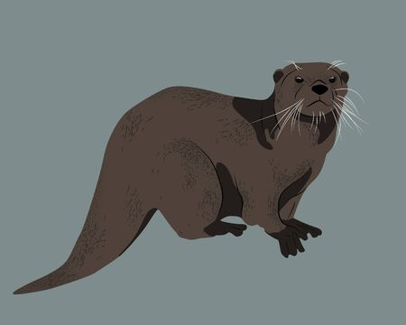 Realistic vector drawing of an otter. Wild animal and great swimmer with broun fur and tail. Isolated full size otter illustration.