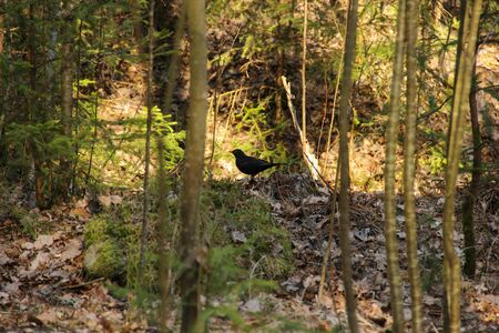 Bird that hidding in forest. Dried leaves and green moss that cover the forest soil.