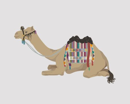 African camel covered with blanket lying on the ground. Blanket with ethnic ornaments and tassels decorates a camel.