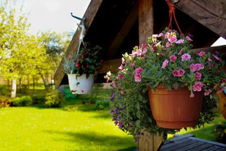 Hanging flower pot in front of the backyard. Decorating a summer house garden with flowers. Banco de Imagens