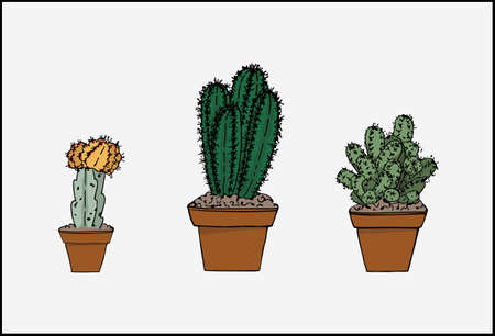 Set of potted cactuses. Different color and shape cactuses. Vector illustration.
