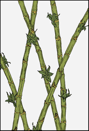 Bamboo plants background. Blooming bamboo stalks vector illustration.