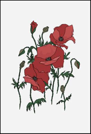 Red poppy flower arrangement. Vector illustration of wild poppy flowers.