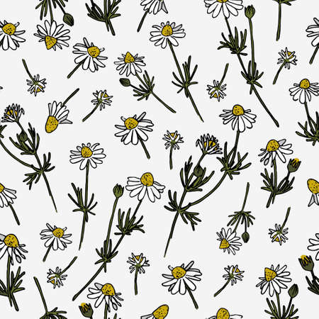 Chamomile vector pattern. Herbal doodle. Camomile set. Daisy ornament.