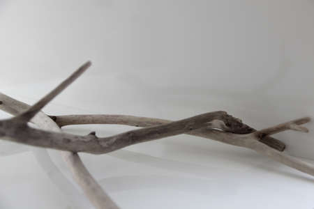 Bleached wooden twigs. Driftwood branches. Knotted limbs of eroded wood.