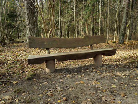 Wooden bench in the mixed forest. Empty bench for rest and picnic.