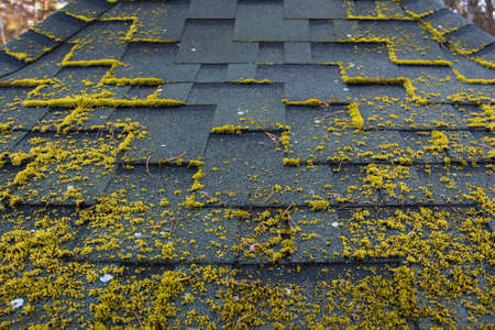 Asphalt roofing in a symmetrical pattern. Composite shingle. Repeating tile. Moss grows at an asphalt tile. 免版税图像